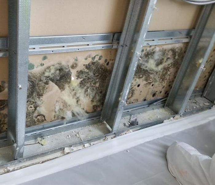 Mold Remediation Moorpark/Fillmore/Santa Paula Residents:  Follow These Mold Safety Tips If You Suspect Mold