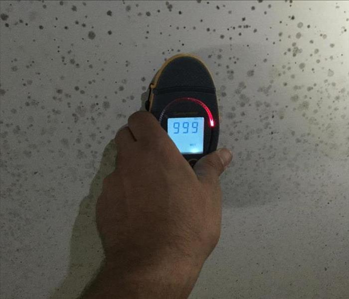 Mold Remediation Things You Should Know About Mold