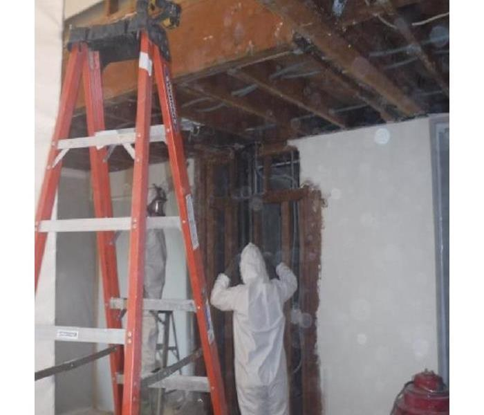 Mold Remediation Your Friendly Neighborhood Mold Busters